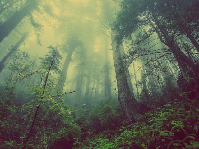 Nova ferramenta permite comparar emissões por floresta em seis países