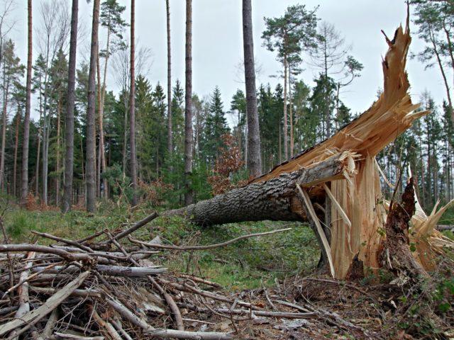 Relatório mostra que danos ao planeta serão desastrosos para saúde humana se ações não forem tomadas