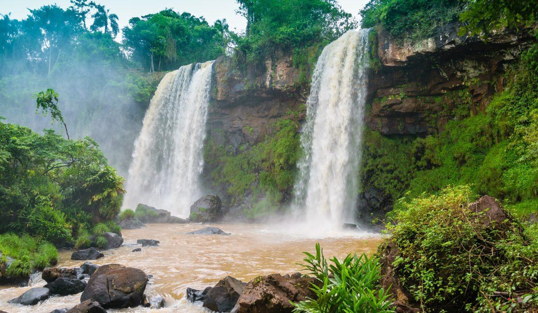 Brasil apresenta sistema online de gestão de dados sobre biodiversidade