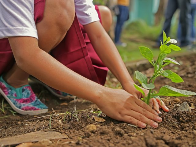 Comissão aprova Projeto nasce uma criança, planta-se uma árvore