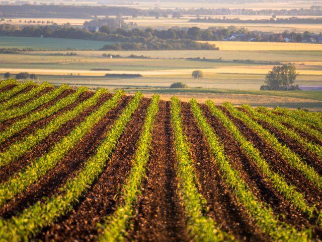Fundo verde para financiar produção de soja e milho sustentável no Brasil é lançado em Londres