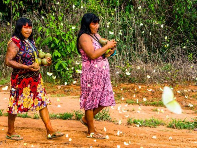 Grupos indígenas do Brasil estão entre vencedores de prêmio da ONU