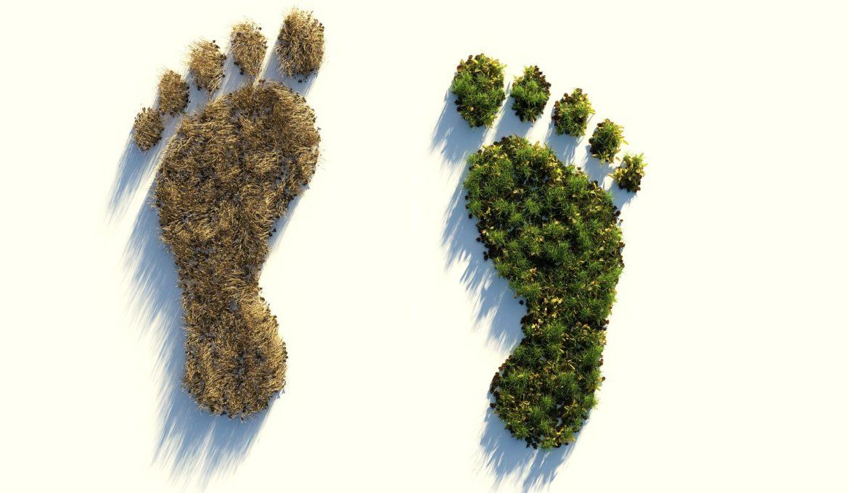 Por que um planeta saudável e uma economia saudável andam de mãos dadas