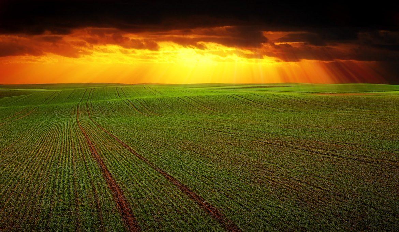 Para alimentar as gerações futuras, os países devem investir em solos vivos