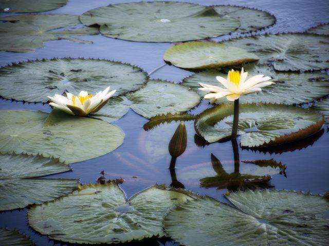 Sistema online sobre biodiversidade brasileira ganha nova plataforma