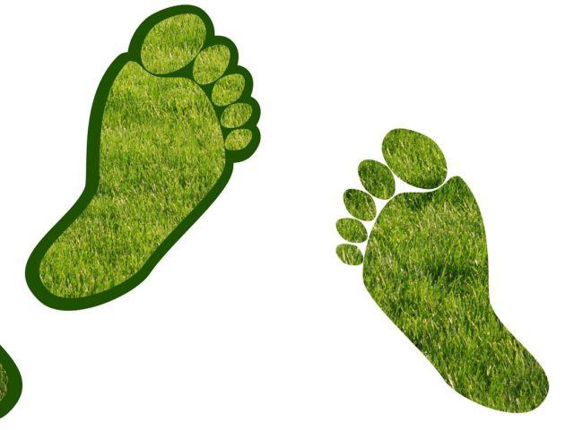 Rede Brasil do Pacto Global promove cursos de Precificação de Carbono