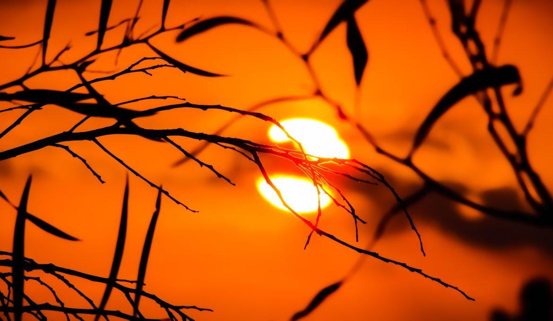 Conheça alguns projetos para diminuir o aquecimento nas cidades