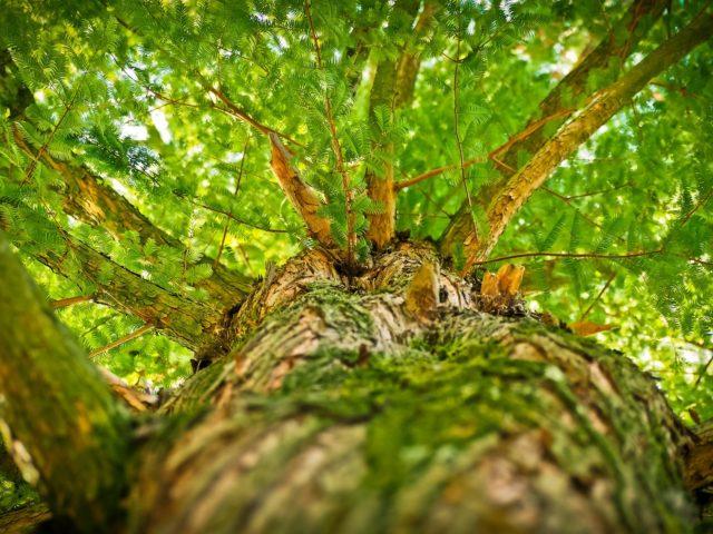 Jovens alemães criam aplicativo para reflorestamento global