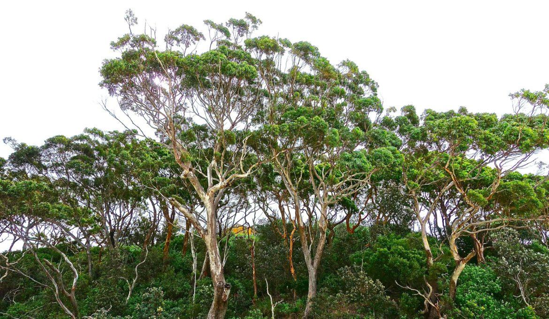 Projeto de Lei quer liberar plantio de espécies nativas sem necessidade de autorização
