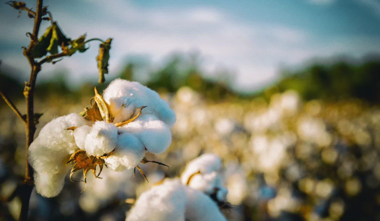 """""""Plant-based fabrics"""": o caminho para uma indústria têxtil mais sustentável"""