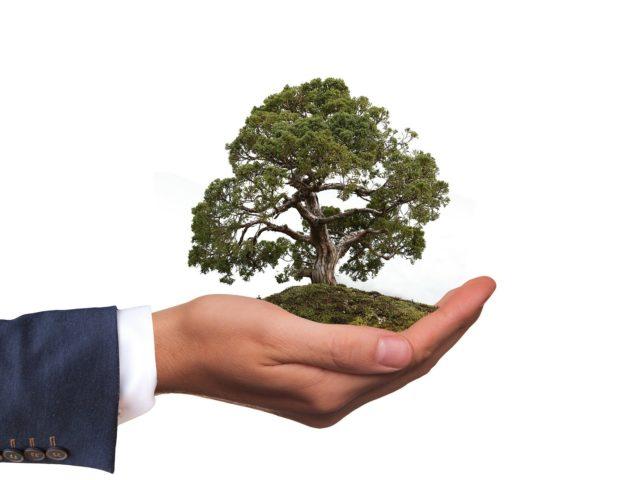Plataforma concede créditos de descarbonização para produtores e importadores