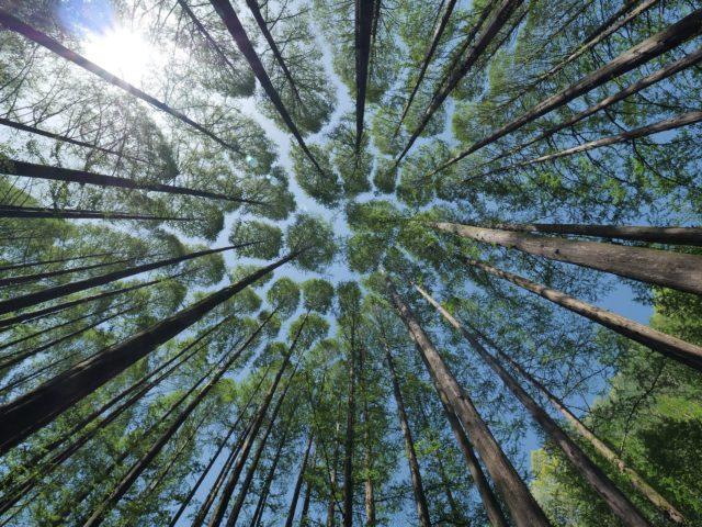 Plano Plurianual da União (PPA) contempla programas de meio ambiente e sustentabilidade