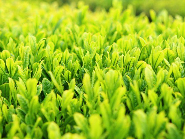Projeto de Lei quer isentar comércio de biodefensivos agropecuários de Cofins e PIS/Pasep