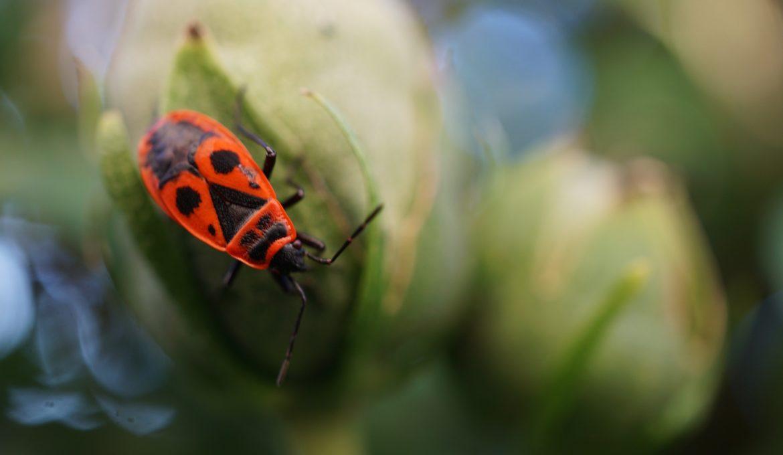 Biodiversidade é tema da Bienal Internacional de Cartazes