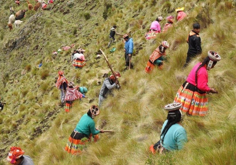 Projeto quer restaurar florestas andinas para combater as mudanças climáticas