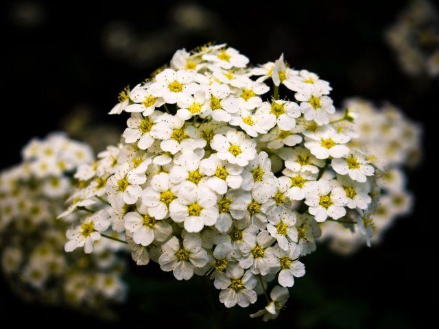 Flores sempre-vivas de MG entram na lista do patrimônio agrícola mundial
